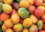 FLORIDA'S TROPICAL FRUIT OASIS